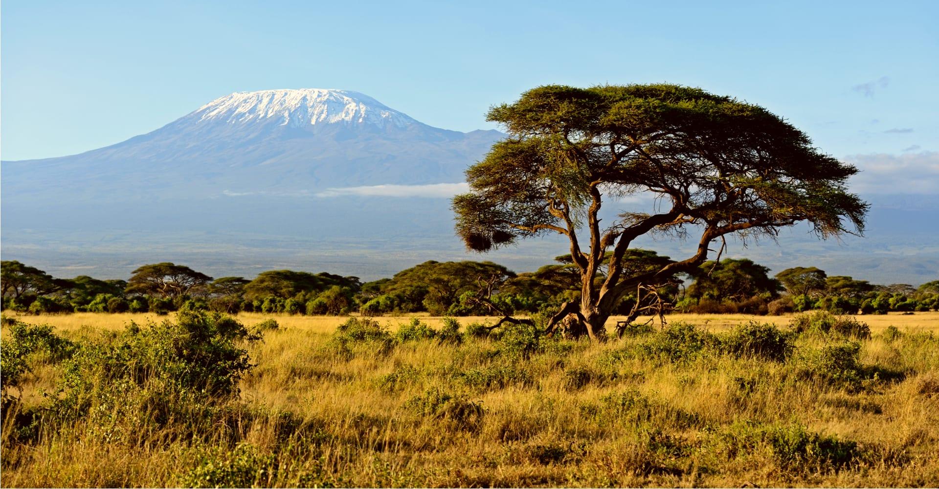 Magellan Tours - Afrikansk savanne ved Kilimanjaro