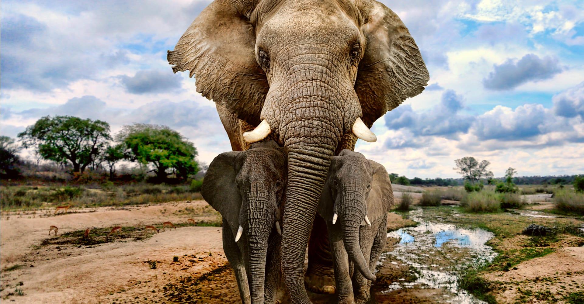 Magellan Tours - Elefant med elefantunger i Afrika
